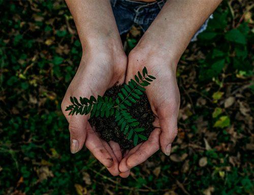 Storskalig trädplantering kan neutralisera tio års koldioxidutsläpp